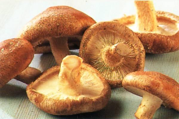 Costul înființării unei mici ciupercării se ridică la 500 de euro