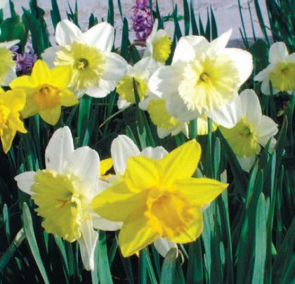 Duminica Floriilor-Sărbătoarea de Florii