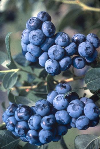 Alimente pe care le ignorăm, dar vitale pentru organism