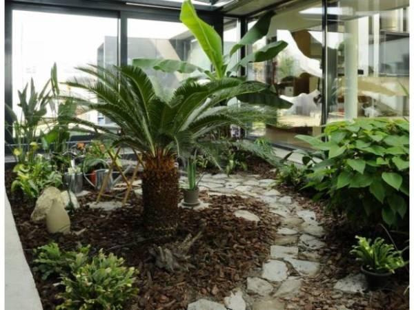 Seră cu plante exotice în Parcul Dendrologic
