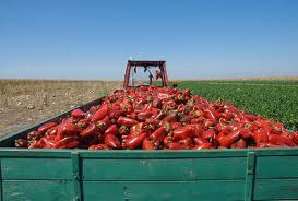 Agricultorii eco, obligaţi să işi reinregistreze activitatea până la 25 octombrie