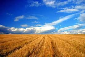 Peste 70% din recolta agricolă, vândută direct din tarla