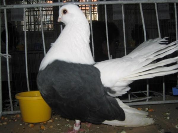 Expoziţie de păsări şi animale mici