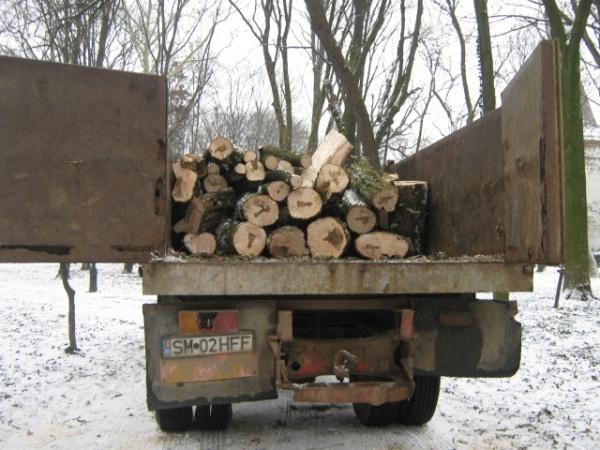 135.000 de hectare de pădure, pentru un ocol silvic privat condus de o persoană cu nouă dosare penale