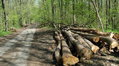 Despre mafia pădurilor din Bihor