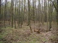 """Acţiunea """"Scutul Pădurii 2012"""""""