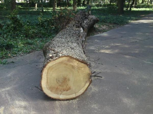 Acţiuni pentru combaterea furturilor de lemne