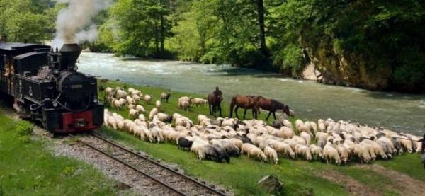 Trenul cu aburi Mocăniţa, simbolul turistic al Maramureşului