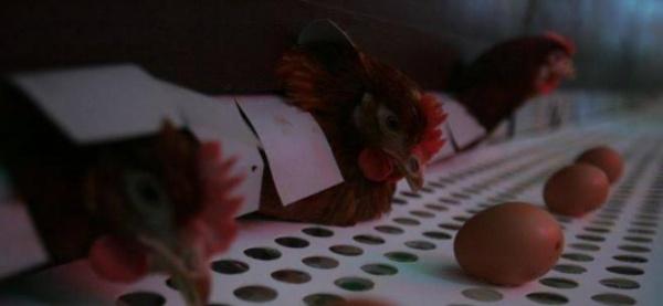 Ouăle marcate cu cifra trei, interzise de la începutul lui 2012