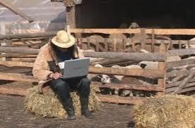 Ciobanii ţin pasul cu tehnologia – mieii de Paşte, vânduţi pe Internet