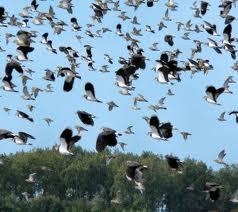 """Monitorizarea păsărilor organizată cu ocazia evenimentului ecologic """"Ziua Mondială a Zonelor Umede"""""""