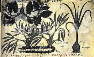 Plantele vindecătoare ale dacilor