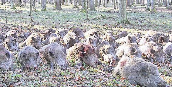 Proteste la vânătoarea lui Ion Ţiriac de la Balc
