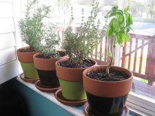 Pregăteşte plantele de apartament pentru primăvară