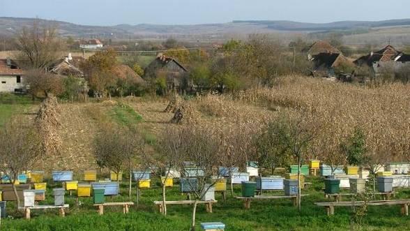 Apicultura aduce profit şi cu o investiţie mică – 7.000 de euro