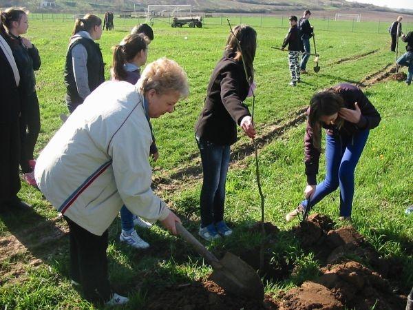 Campanie de plantare lansată de Consiliul Judeţean şi APM