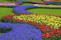 A venit vremea plantării florilor
