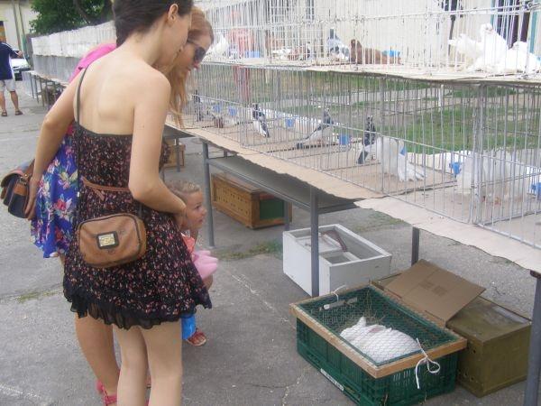Expoziţie de păsări şi animale mici de Zilele Careiului