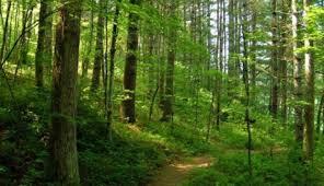 În ultima zi de guvernare Ponta a dat 86% din pădurile ţării