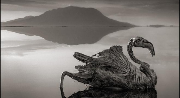 Lacul groazei: apa care transformă orice vietate în stană de piatră