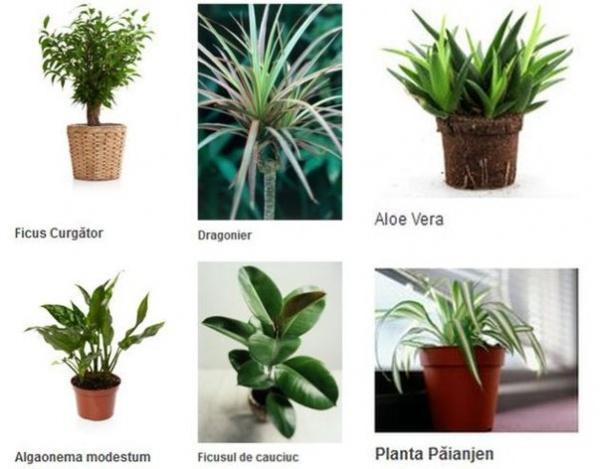 6 plante de apartament care purifică aerul
