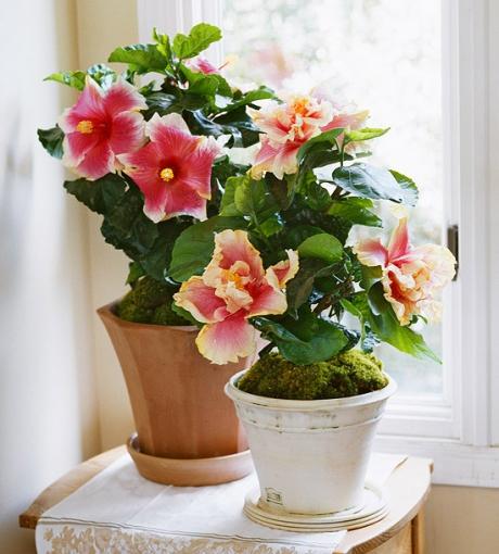 10 plante care adoră să stea inflorite