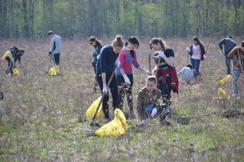 """Liceul Teoretic Carei obţine loc doi la categoria """"Plantare"""" din cadrul Concursului Național ecOprovocarea"""