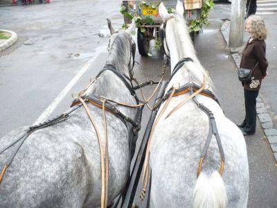 Găleata cu balegă de cal