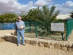 Pomul lui Matusalem a renăscut, după două milenii