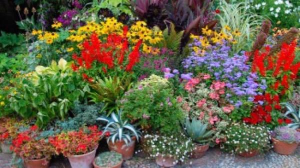 9 plante de interior magice care atrag dragostea, bucuria si prosperitatea