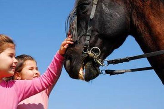 Expoziţie de cai de rasă la Ruşeni, Satu Mare