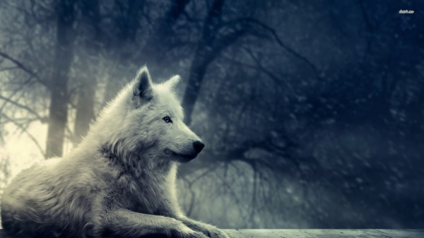 Lupul, ca totem al dacilor, și Anul Nou Dacic