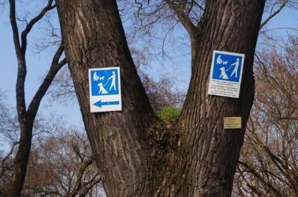Recunoaşteţi copacul pe care sunt bătute în cuie indicatoarele?