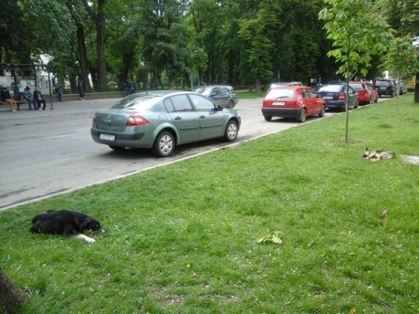Primăria Carei va construi adăpost pentru câinii fără stăpân