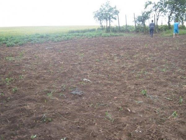 Cât mai costă pământul arabil la Carei