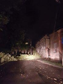 Carei: Copacii căzuţi au blocat drumul