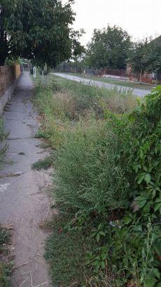 Şoc şi groază pe străzile dinspre Tiream. Cititori careieni denunţă lipsa de reacţie a administraţiei locale