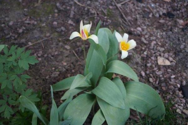 20 martie: Echinocțiul de primăvară
