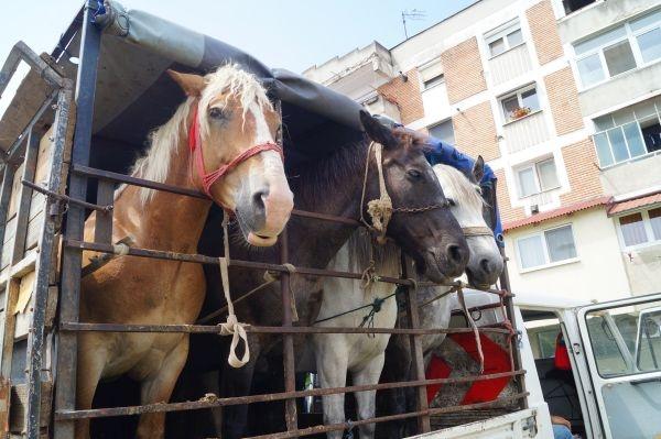 Poliția Tășnad a prins un hoț de cai