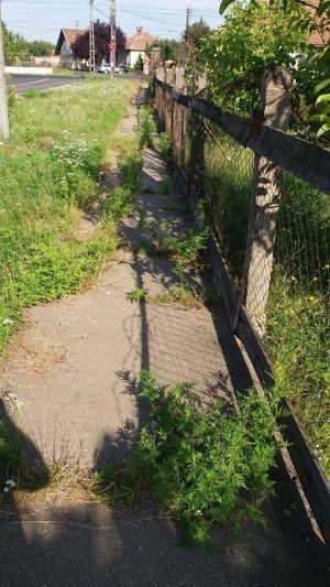 Strada Grigore Alexandrescu din Carei