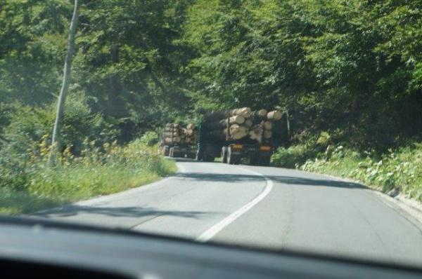Scad tăierile ilegale din fondul forestier