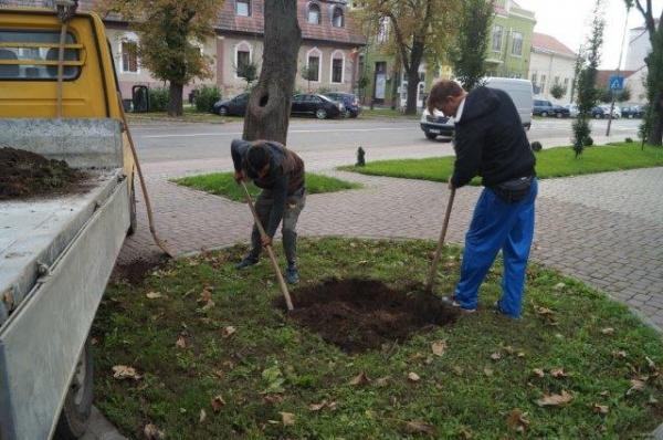 Au început lucrările pentru soclul pe care va fi amplasat bustul lui Mihai Eminescu la Carei