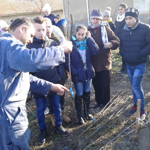 Pomi fructiferi sădiţi de elevi în curtea şi grădina Bisericii din Resighea