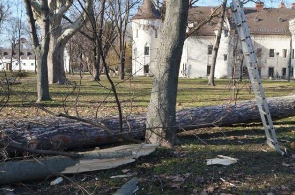 Cine răspunde pentru distrugerea arborilor din …Parcul Dendrologic Carei?