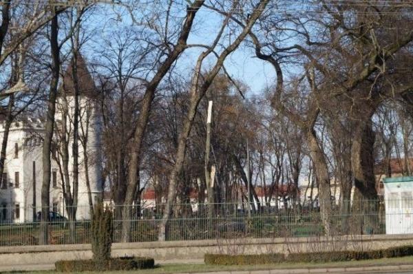 Garda de Mediu arată cu degetul spre APM Satu Mare care ar fi dat avizele de tăiere….în parcul dendrologic Carei