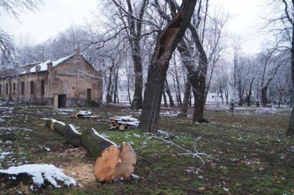 Comanda pe SEAP pentru tăierea a 119 arbori din Carei – Contractul necunoscut la Primăria Carei