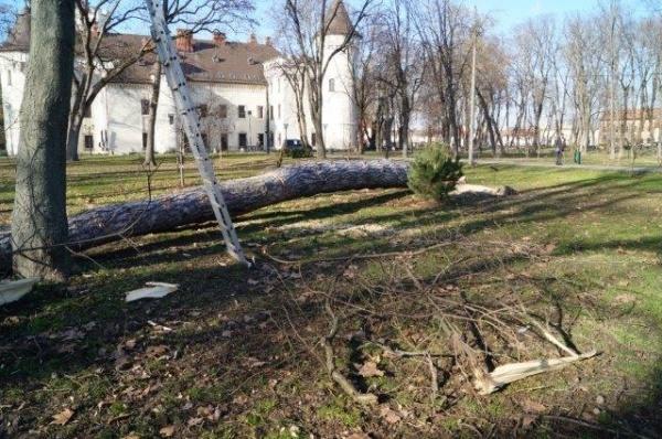 Careian prins cu 3,7 mc material lemnos transportat ilegal. Destinația sutelor de arbori tăiați de Primăria Carei nu a fost supusă verificărilor
