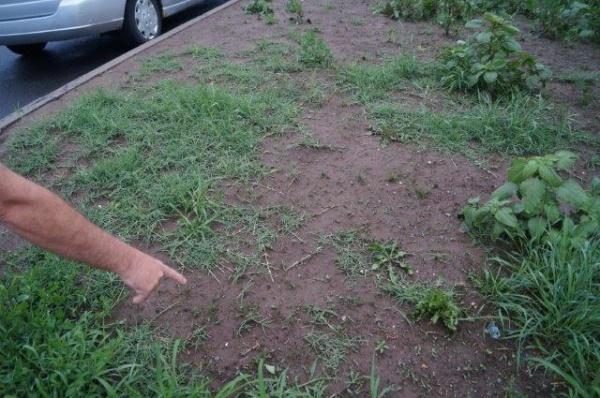 Spaţii verzi şi trotuare pe calea Mihai Viteazu din Carei