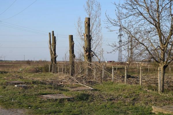 Green-Report despre toaletările arborilor