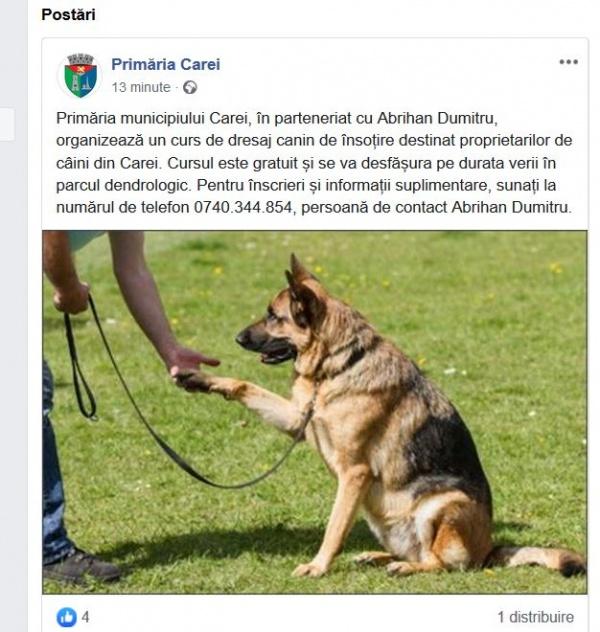 Primăria Carei organizează curs de dresaj canin